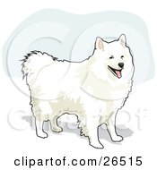 Clipart Illustration Of A Fluffy And Friendly White American Eskimo Dog Standing