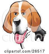 Clipart Illustration Of A Friendly Brown White And Black American Foxhound Dog Hanging Its Tongue Out by David Rey