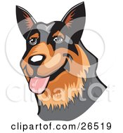 Clipart Illustration Of A Friendly Brown And Black Australian Cattle Dog Hanging Its Tongue Out