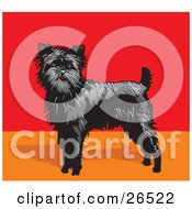 Alert Black Affenpinscher Dog In A Red And Orange Room by David Rey