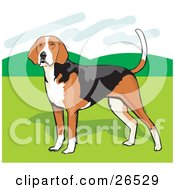 Clipart Illustration Of A Brown White And Black American Foxhound Dog Standing On Grass by David Rey