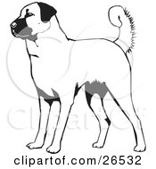 Clipart Illustration Of An Alert Anatolian Shepherd Dog Black And White