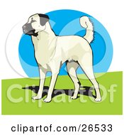 Clipart Illustration Of An Alert Anatolian Shepherd Dog Standing On Grass