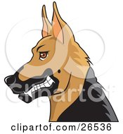 Growling German Shepherd Guard Dog With Cropped Ears In Profile by David Rey