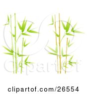 Stalks Of Green Bamboo Spurting Over A White Background