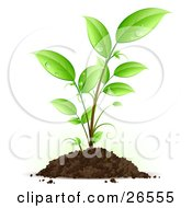 Clipart Illustration Of A Seedling Plant With Drops Of Dew Scattered On The Green Leaves Growing From A Pile Of Dirt by beboy #COLLC26555-0058