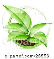 Clipart Illustration Of A Green Seedling Plant With Dew Drops On The Leaves Spurting From A Dirt Mound With A Green Circle Around It