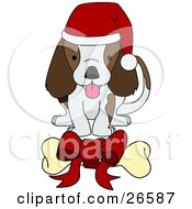 Adorable Brown And White Puppy Dog Wearing A Santa Hat And Wagging Its Tail While Eying A Bone With A Red Bow On It