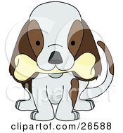 Cute Brown And White Puppy Dog Wagging Its Tail And Chewing On A Bone