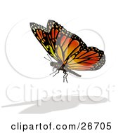 Clipart Illustration Of A Beautiful Orange Black And Yellow Monarch Butterfly And Shadow Over A White Background
