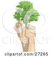 Clipart Illustration Of A Tall Green Adult Tree Being Held Up In A Pair Of Gentle Human Hands On A White Background