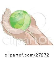 Green Planet Earth Nestled In Gentle Cupped Human Hands On A White Background
