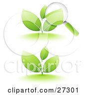 Clipart Illustration Of A Magnifying Glass Inspecting The Leaves Of A Green Sprouting Plant Also Includes Just The Plant On A White Background