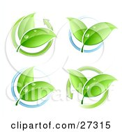 Four Sets Of Leaves With Dew Circled By Blue Rings Or Green Arrows