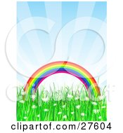 Colorful Arched Rainbow Over A Grassy Field Of White Daisy Wildflowers With A Blue Sky