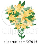 Bouquet Of Pretty Pale Orange Lily Flowers With Green Leaves On A White Background