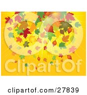 Clipart Illustration Of A Bursting Yellow Background With Yellow Brown Orange Green And Red Falling Maple Leaves In Autumn