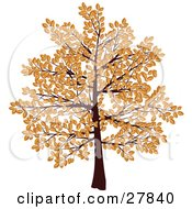 Tree With Branches Covered In Brown Autumn Leaves Over A White Background