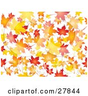 Clipart Illustration Of A Background Of Orange Red And Yellow Maple Leaves Falling Over White by KJ Pargeter