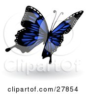 Clipart Illustration Of A Beautiful Dark Blue Butterfly With Black Markings And White Spots Along The Edges Of Its Wings