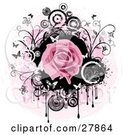 Blooming Pink Rose Over A Black Circle With Dripping Paint Black And White Flowers Circles And Butterflies Over A Pink And White Background