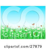 Clipart Illustration Of Orange Butterflies Fluttering Over Tall Green Grasses And White Daisy Flowers On A Spring Day
