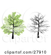 Clipart Illustration Of A Tree With Green Spring Leaves And With Bare Branches Over A White Background
