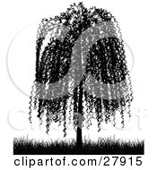 Clipart Illustration Of A Black Silhouetted Weeping Willow Tree And Grasses Over White
