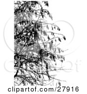 Clipart Illustration Of Bare Tree Branches Silhouetted In Black Over White