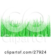 White Background With Green Blades Of Grass In A Lawn