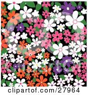 Clipart Illustration Of A Colorful Background Of White Orange Pink And Purple Flowers And Leaves Over Black