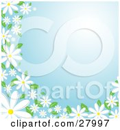 Clipart Illustration Of White Daisy Flowers With Green Leaves Bordering The Left And Bottom Edges Of A Blue Background by KJ Pargeter