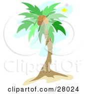 Clipart Illustration Of A Tall Tropical Palm Tree With Coconuts And Stars In The Sky by bpearth