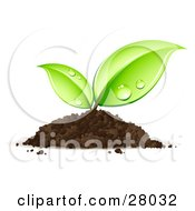 Clipart Illustration Of A Sprouting Seedling Plant Emerging From A Pile Of Dirt With Dew On Its Leaves