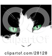 Clipart Illustration Of A Black And White Cats Face With Bright Green Eyes by KJ Pargeter