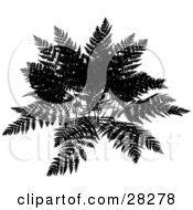 Clipart Illustration Of A Black Silhouetted Fern Over A White Background