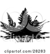 Clipart Illustration Of A Silhouetted Fern Plant Over A White Background