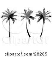 Clipart Illustration Of Three Tropical Palm Trees Silhouetted In Black On A Reflective White Surface