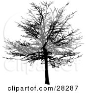 Clipart Illustration Of A Black Silhouetted Bare And Leafless Maple Tree In Winter