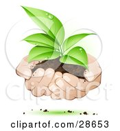 Clipart Illustration Of Human Hands Supporting A Sprouting Green Plant In Dirt Symbolizing Support by beboy #COLLC28653-0058