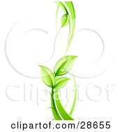 Clipart Illustration Of A Lush Green Vine With Dew Drops On The Leaves