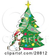 Clipart Illustration Of A Cute Puppy Dog Wearing A Santa Hat And Sniffing A Christmas Tree Decorated With Ornaments And Dog Bone Biscuits