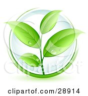 Clipart Illustration Of A Lush Green Organic Plant With Dew On The Leaves Over A Clear Orb Circled In Green by beboy