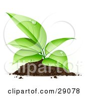 Clipart Illustration Of An Organic Seedling Plant With Dew On Its Green Leaves Growing From A Pile Of Dirt by beboy