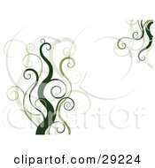 Clipart Illustration Of A White Background With Dark And Light Green Curly Vines