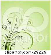Clipart Illustration Of A Green Background With Curly Green Grasses