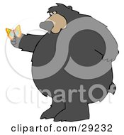 Clipart Illustration Of A Big Chubby Wild Bear Standing On His Hind Legs Gazing At A Butterfly On His Paw