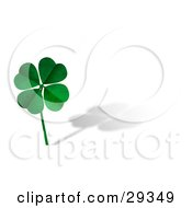Green Textured Four Leaf Clover On A Long Stem Over A White Background With A Shadow