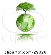 Clipart Illustration Of A Tree Growing On Top Of The Grassy Earth Earth Over A Reflective Surface