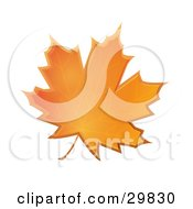 Clipart Illustration Of An Orange Autumn Maple Leaf